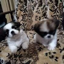 Продам щенков пекинеса, в г.Новая Каховка
