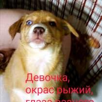 Продам щенков хаски, метисы, в Хабаровске