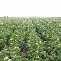 Картофель урожая 2020, в г.Кишинёв