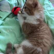 Продам котёнка 3-х месячного, в Санкт-Петербурге