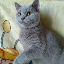Rainbow kitten, в г.Кривой Рог