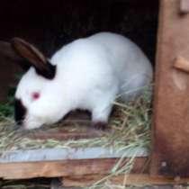 Кролики Калифорния, в Королёве