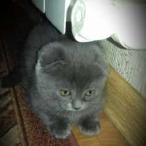 Отдам котят, в Воронеже