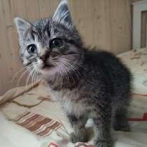 Котёнок-антистресс, в Выборге