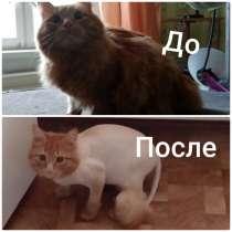 Стрижка кошек, в Усть-Илимске