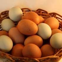 Продаю яйцо куриное от домашних кур, в Анапе
