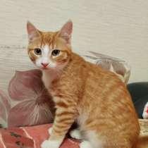 Котенок девочка, в Твери