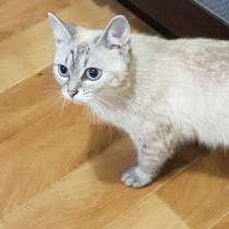 Кошка голубоглазая, в Набережных Челнах