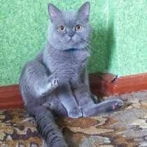 Продам красивых котят срочно, в г.Запорожье