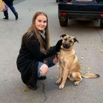 Незаменимый пёс-помощник в загородный дом, в Санкт-Петербурге