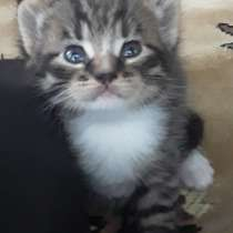 Котёнок для вас, в Переславле-Залесском