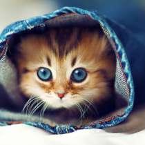 Отдам в хорошие руки котят, в Новокузнецке