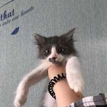 Котята даром, в Тольятти