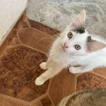 Мы нашли кошечку жалко ее, помогите пожалуйста, в Саках