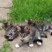 Котята в добрые руки, в Обнинске