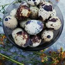 Перепелиные яйца, в Луховицах