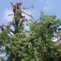 Валка опасных деревьев, в г.Борисов