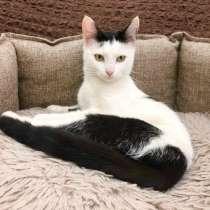 Неповторимая личность котенок Долли в дар, в Москве