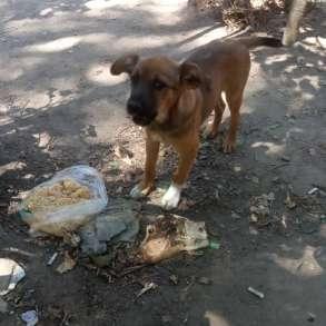 Девочка щенок, в г.Бишкек