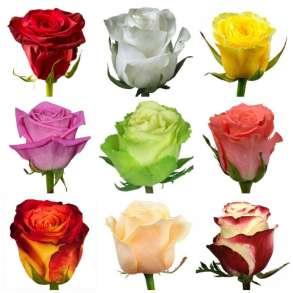 Розы из Эквадора оптом, в г.Кито