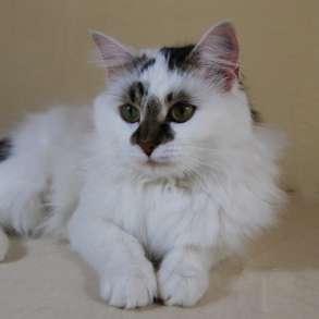 Кошка Мила, в Москве