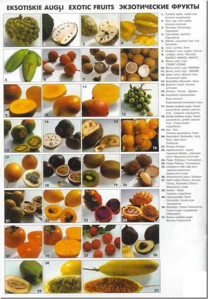 Свежие экзотические фрукты и овощи