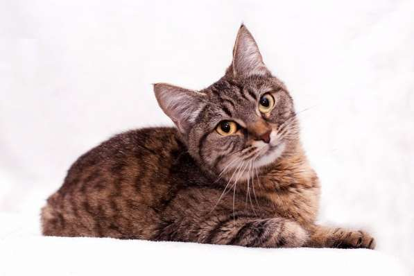 Роскошный котенок Дюссолька в добрые руки