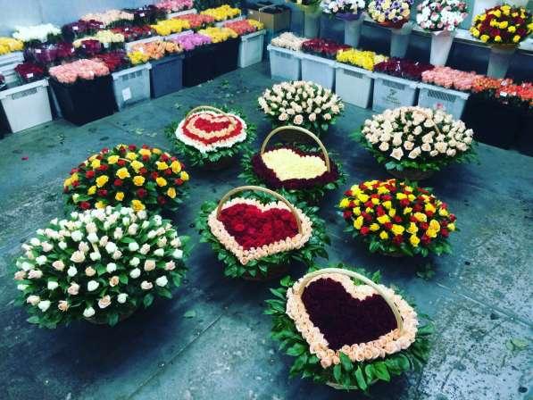 Цветы розы 101
