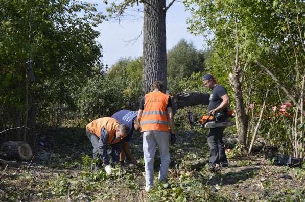 Убрать дерево, спилить дерево любых масштабов