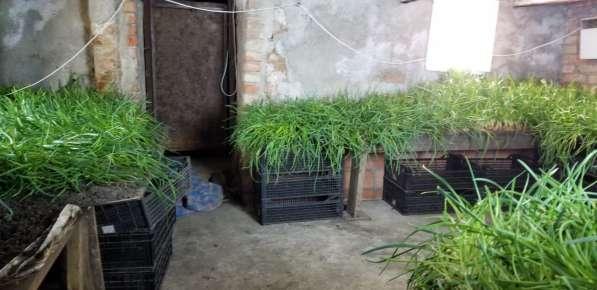 Сдам подвальное помещение 120 кв. м в Калининграде фото 9