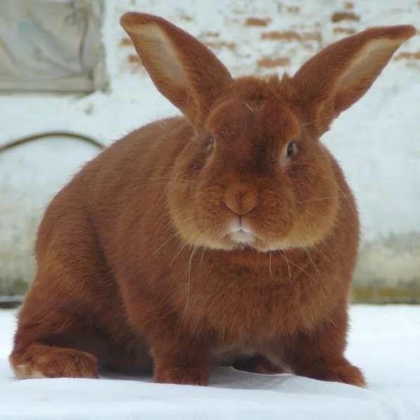 Комбикорм для молодняка кроликов ПК 90-4