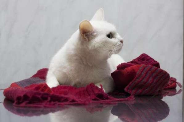 Прекрасная кошка по имени Сага в добрые руки! в Москве фото 4