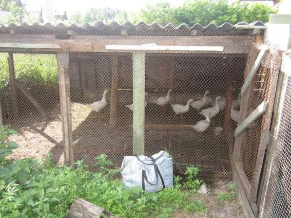 Купи дом в Экологическом районе Тюмени в Тюмени