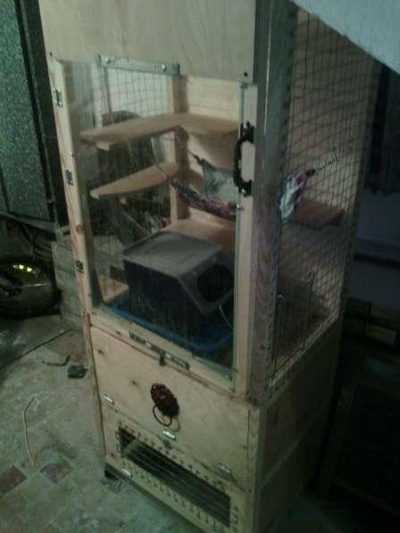 Клетка витрина