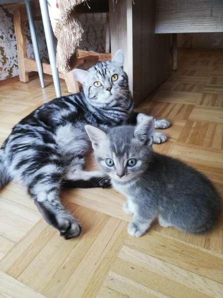 3 Britische Kätzchen auf der Suche nach einer Familie в фото 6
