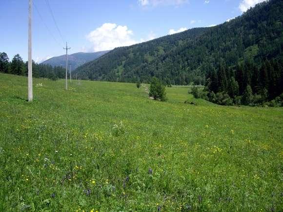 320 соток на Алтае под турбизнес на АВТО