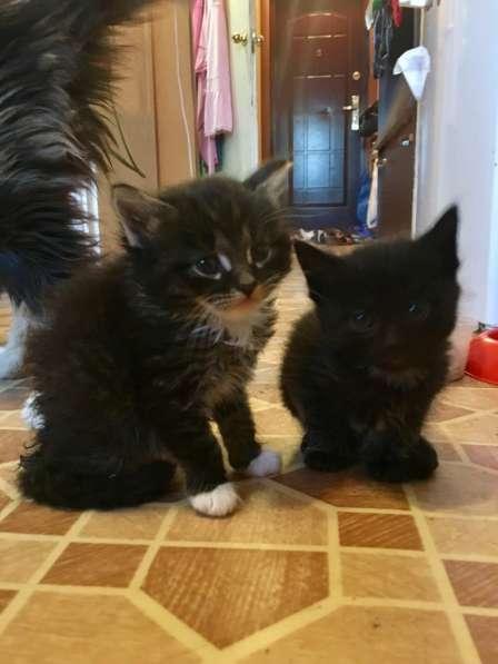 Котята-малыши в добрые руки! в Москве фото 3
