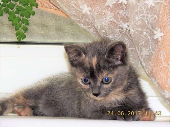 Котята в дар в Домодедове фото 3