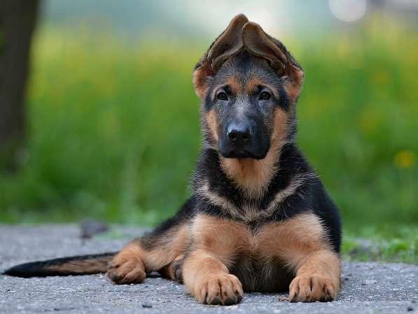 Обучение хозяина дрессировке своей собаки