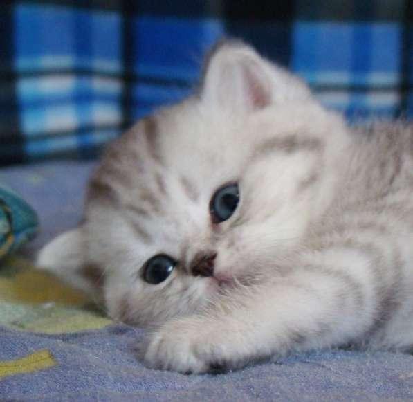 Шикарный котик в пятнистой шубке
