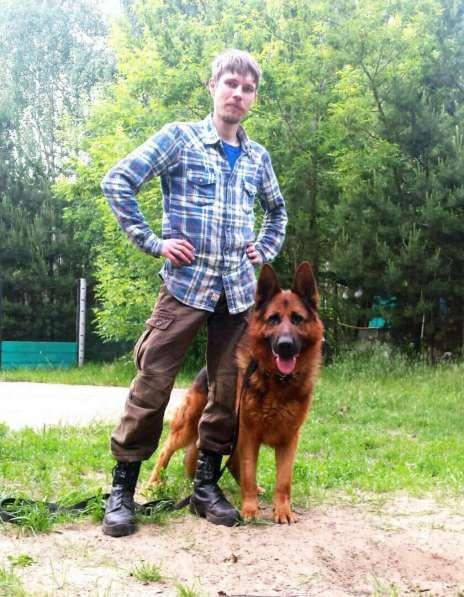 Передержка и дрессировка собак в Раменское фото 12