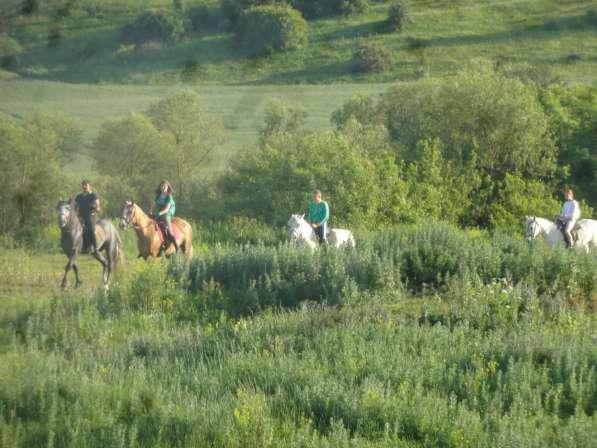 Прогулки на лошадях в Воронеже фото 5