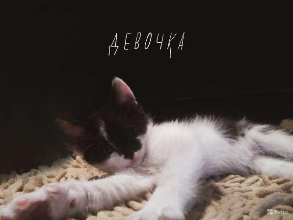 Отдам котяток в Балашихе фото 4