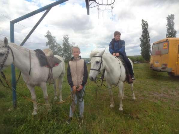 Прогулки на лошадях в Воронеже фото 8