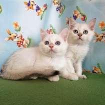 Котик и кошечка с голубыми глазами, в г.Казань