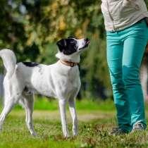 Идеальный семейный пёс, 1 год, 50 см в холке, в г.Санкт-Петербург