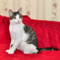Отдам даром Зеленоглазый чудо-котенок Масик в дар, в г.Москва