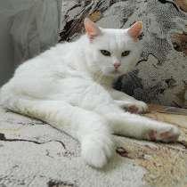 Британское сокровище, великолепная домашняя кошечка Сильвия, в г.Москва