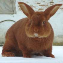 Комбикорм для молодняка кроликов ПК 90-4, в Балашихе