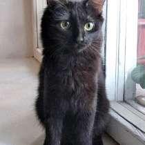 Минипантерка Масенька, домашний котенок в дар, в г.Москва
